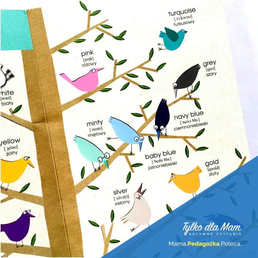 ptaki Angielski Słówko posłówku ksiązka dla 2 latka