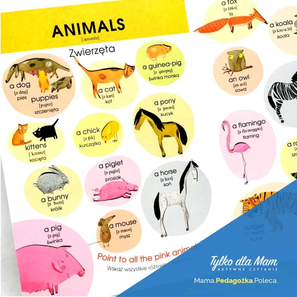 zwierzęta Angielski Słówko posłówku ksiązka dla 2 latka