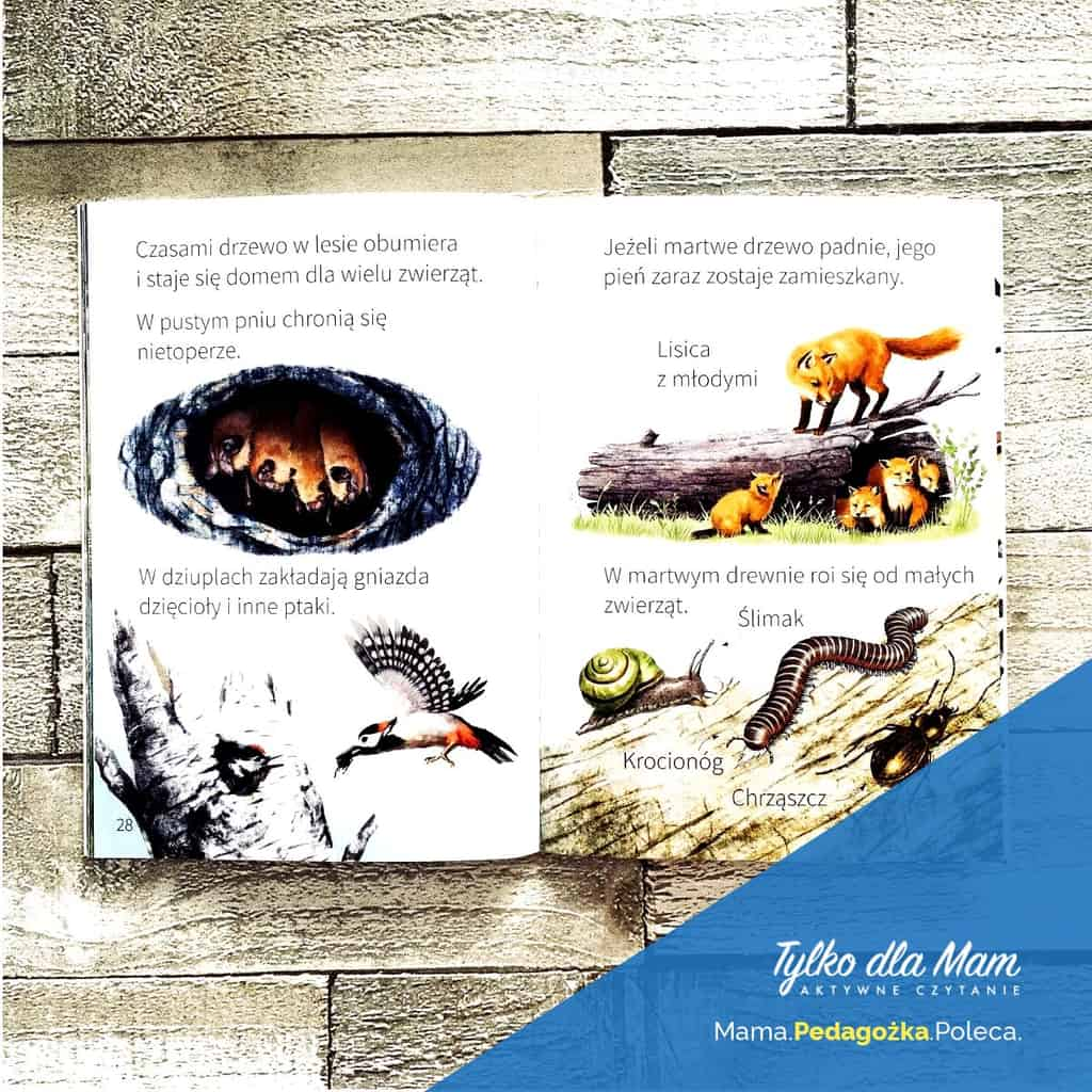 Młodzi Przyrodnicy. Leśne stworzenia ksiązka dla dzieci