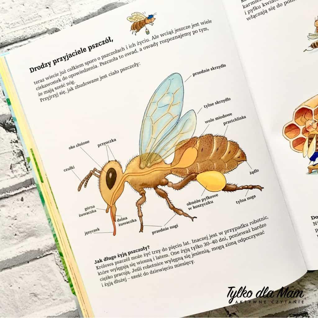 pszczoły iich niezwykły świat 1