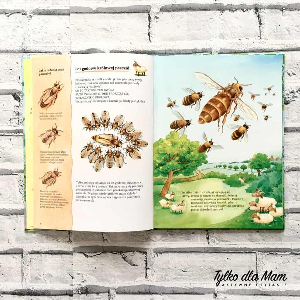 pszczoły iich niezwykły świat królowa