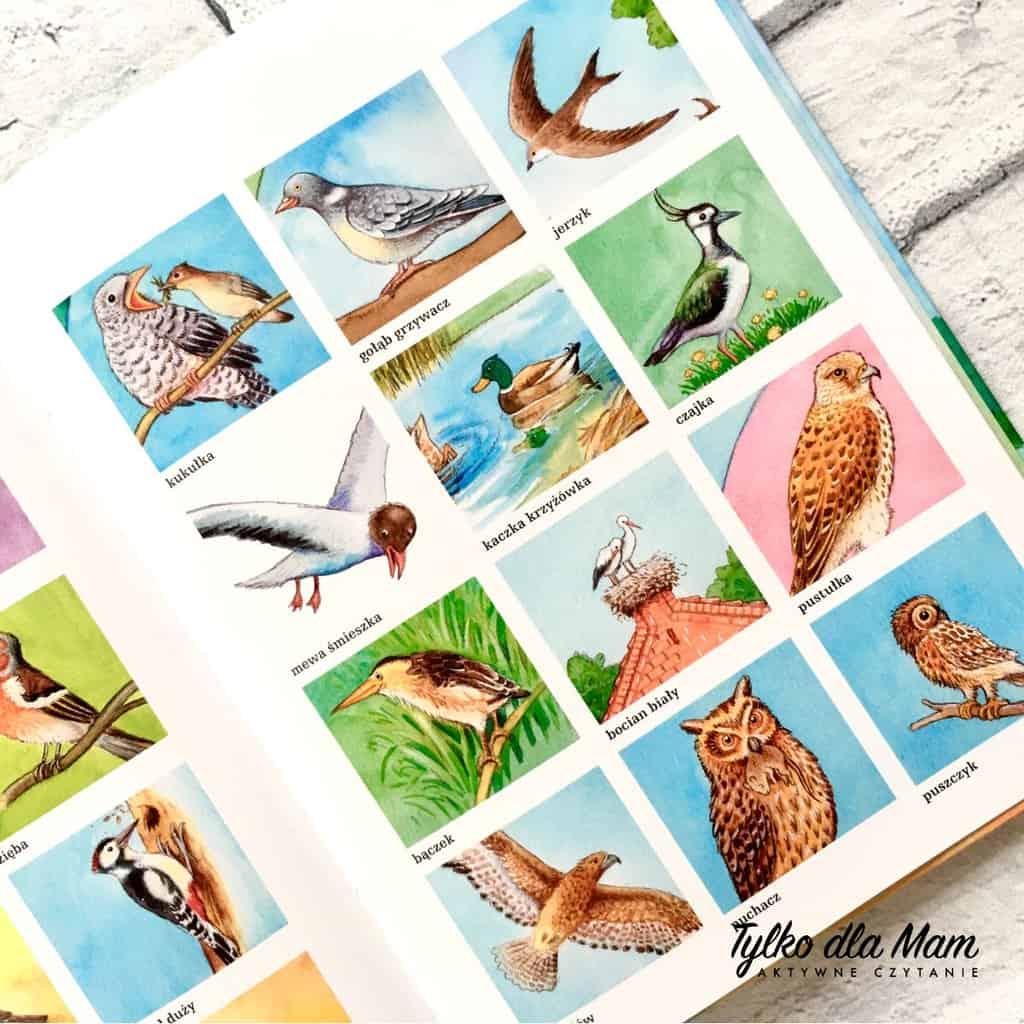 Sikorka Atlas ptaków