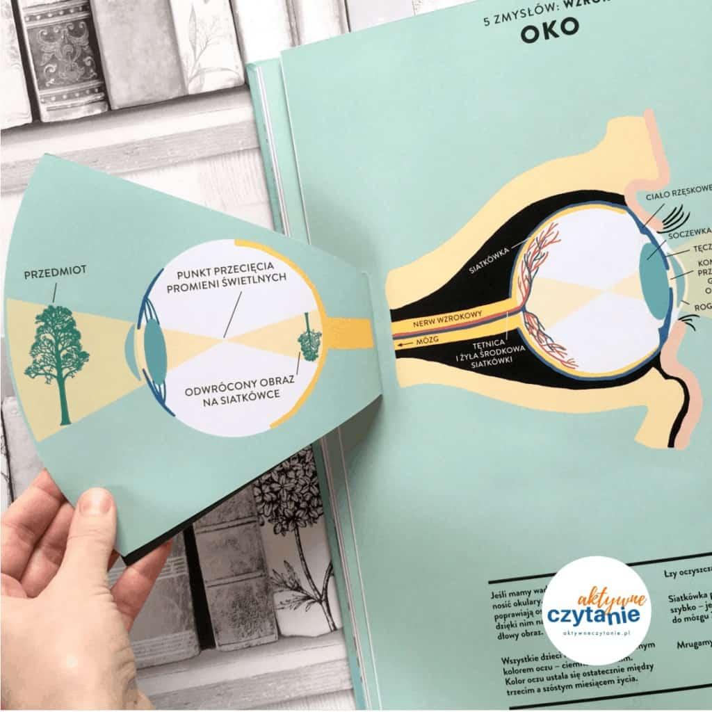 Anatomia obraz ludzkiego ciała ksiązki dla dzieci aokienkami oko środek