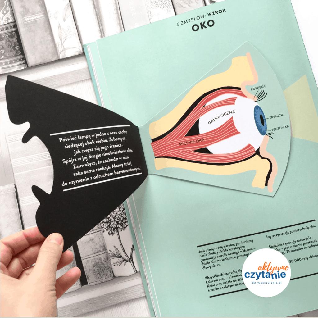Anatomia obraz ludzkiego ciała ksiązki dla dzieci aokienkami  oko gałka oczna