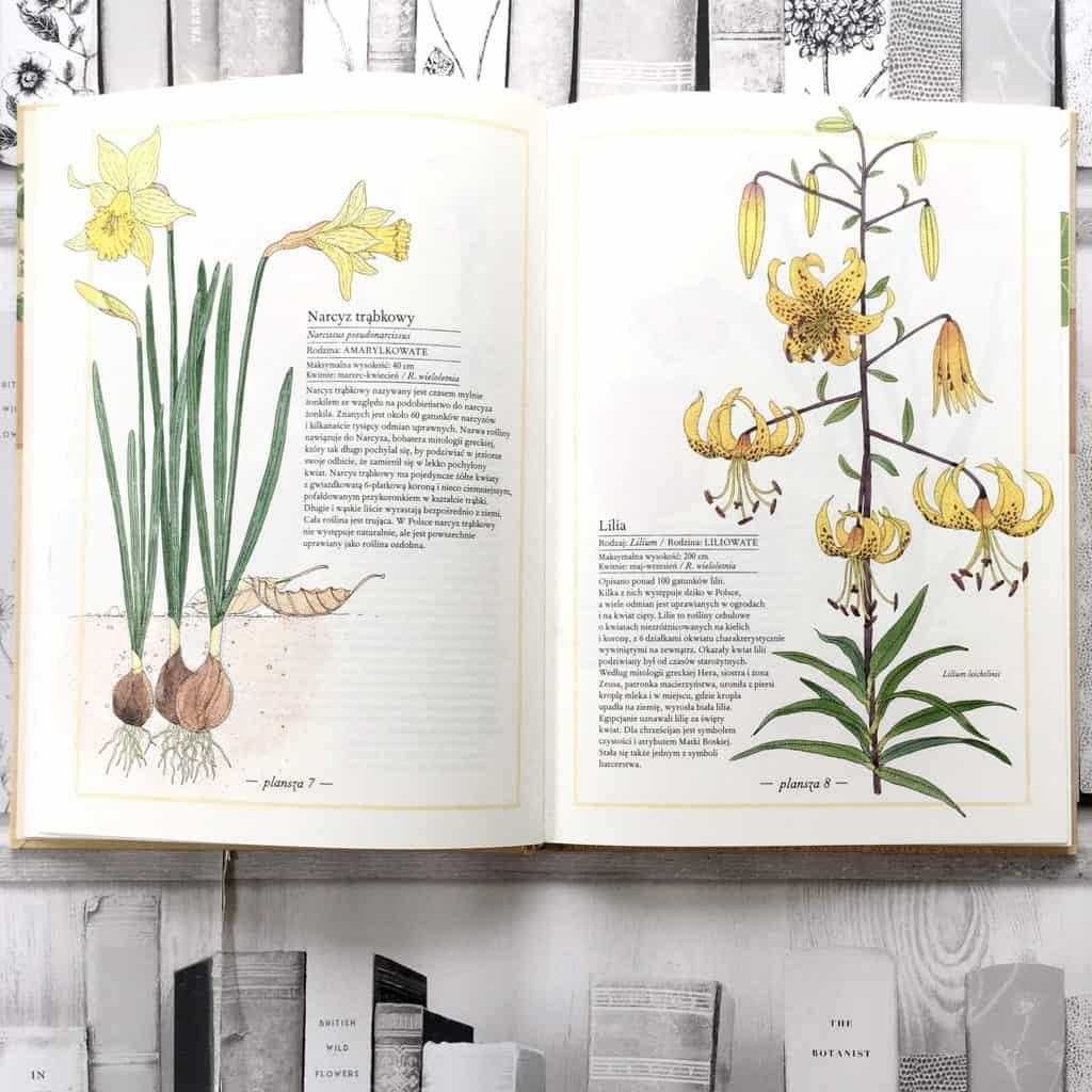 inwentarz-kwiatow-edukacyjne-ksiazki-dla-dzieci-5