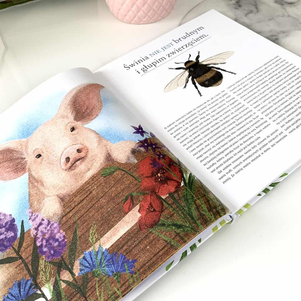 plotki ozwierzetach recenzja ksiazki dla dzieci2